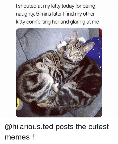 Memes, Ted, and Today: I shouted at my kitty today for being  naughty. 5 mins later I find my other  kitty comforting her and glaring at me @hilarious.ted posts the cutest memes!!
