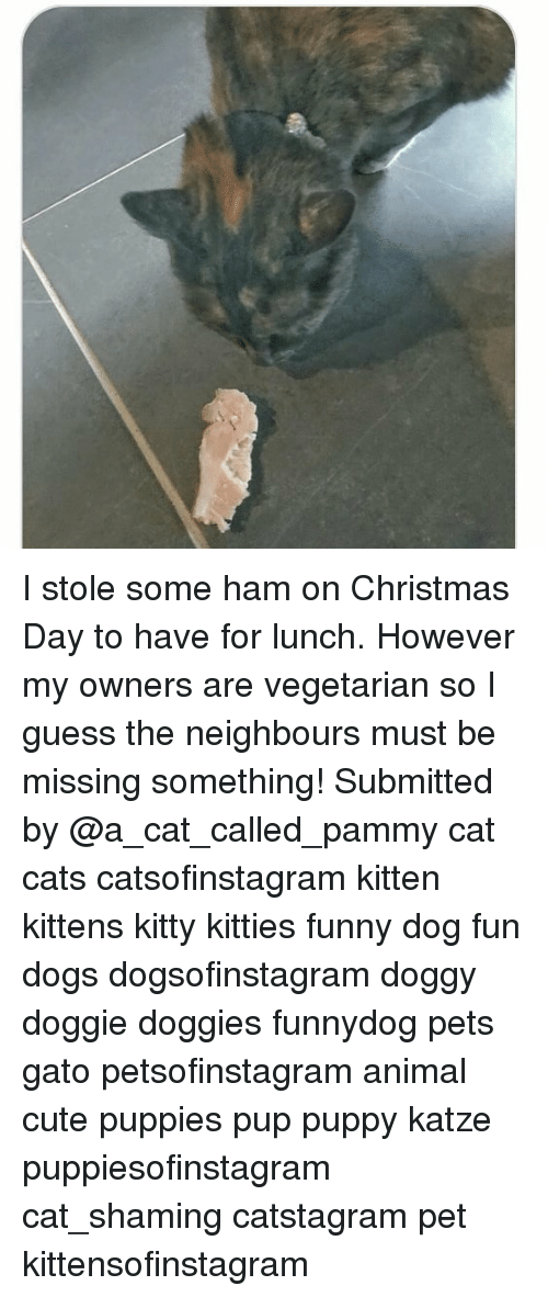 Katze: I stole some ham on Christmas Day to have for lunch. However my owners are vegetarian so I guess the neighbours must be missing something! Submitted by @a_cat_called_pammy cat cats catsofinstagram kitten kittens kitty kitties funny dog fun dogs dogsofinstagram doggy doggie doggies funnydog pets gato petsofinstagram animal cute puppies pup puppy katze puppiesofinstagram cat_shaming catstagram pet kittensofinstagram
