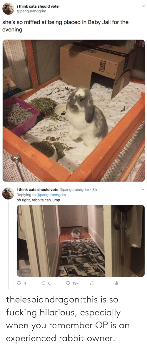 owner: i think cats should vote  @pangurandgrim  she's so miffed at being placed in Baby Jail for the  evening   i think cats should vote @pangurandgrim· 8h  Replying to @pangurandgrim  jump  oh right, rabbits can  li  27 6  197  4 thelesbiandragon:this is so fucking hilarious, especially when you remember OP is an experienced rabbit owner.