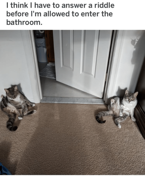 Memes, Riddle, and 🤖: I think I have to answer a riddle  before I'm allowed to enter the  bathroom