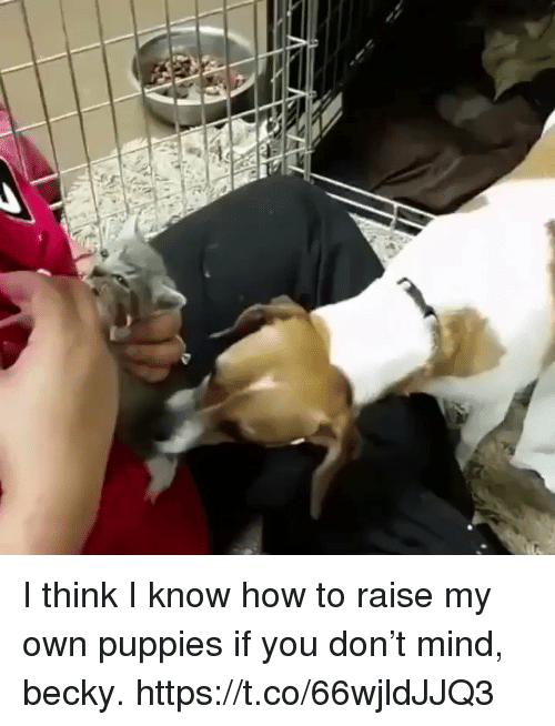 Puppies, How To, and Girl Memes: I think I know how to raise my own puppies if you don't mind, becky. https://t.co/66wjldJJQ3
