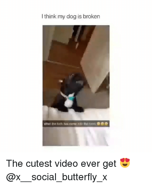 Memes, Butterfly, and Video: I think my dog is broken  What the Ruck has  came into the roome The cutest video ever get 😍 @x__social_butterfly_x