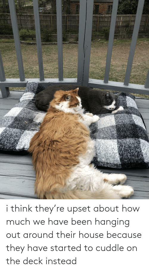 Aww Memes: i think they're upset about how much we have been hanging out around their house because they have started to cuddle on the deck instead