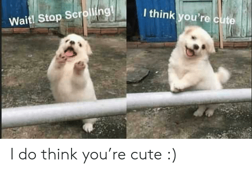 Scrolling: I think you're cute  Wait! Stop Scrolling! I do think you're cute :)
