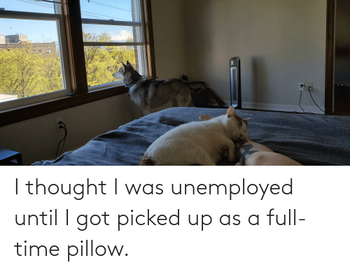 Unemployed: I thought I was unemployed until I got picked up as a full-time pillow.