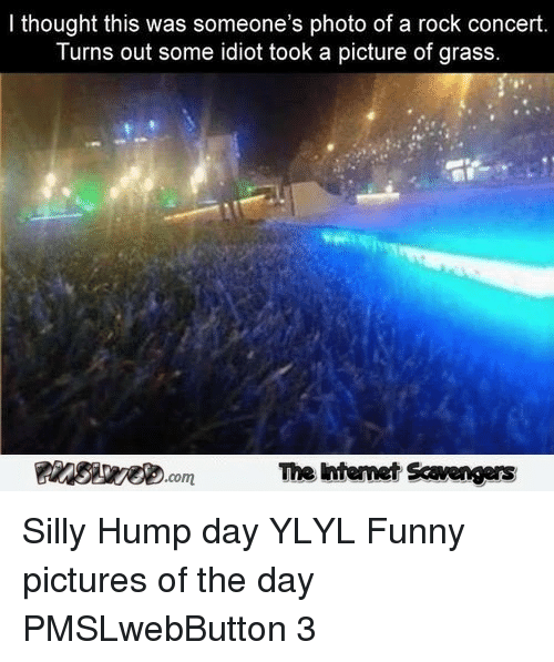 Funny, Hump Day, and Pictures: I thought this was someone's photo of a rock concert  Turns out some idiot took a picture of grass  The Intemet Scavengers <p>Silly Hump day YLYL  Funny pictures of the day  PMSLwebButton 3 </p>