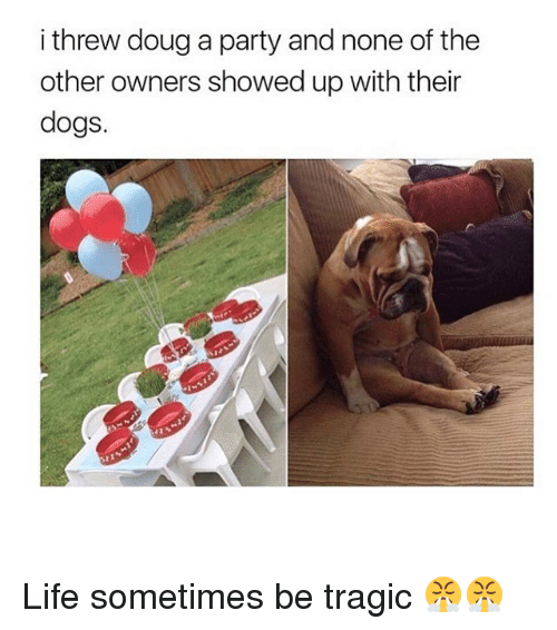 Dogs, Doug, and Life: i threw doug a party and none of the  other owners showed up with their  dogs. Life sometimes be tragic 😤😤