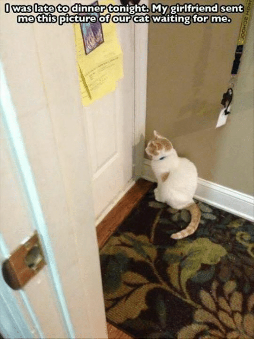 Tonight My Girlfriend: I to dinner tonight. My girlfriend sent  Waslate me this picture of our  Cat waiting for me.