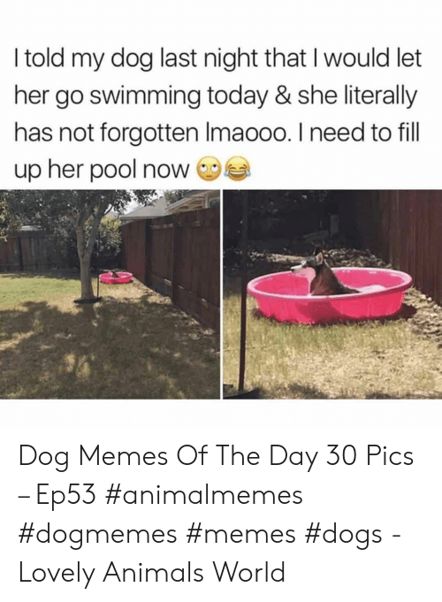 Animals, Dogs, and Memes: I told my dog last night that I would let  her go swimming today & she literally  has not forgotten Imaooo. I need to fill  up her pool now Dog Memes Of The Day 30 Pics – Ep53 #animalmemes #dogmemes #memes #dogs - Lovely Animals World