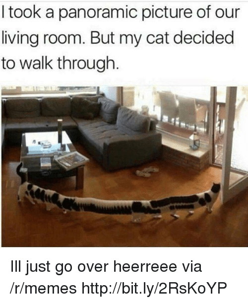 Memes, Http, and Living: I took a panoramic picture of our  living room. But my cat decided  to walk through Ill just go over heerreee via /r/memes http://bit.ly/2RsKoYP