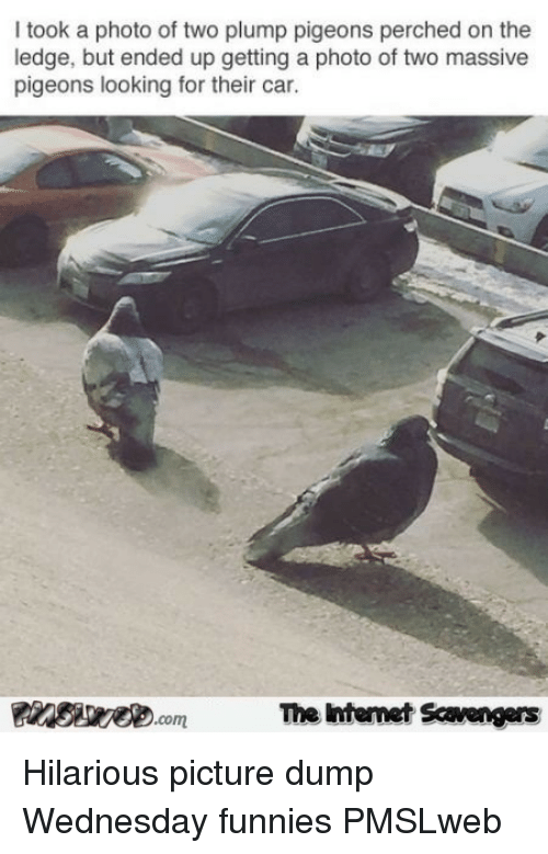 plump: I took a photo of two plump pigeons perched on the  ledge, but ended up getting a photo of two massive  pigeons looking for their car.  The Intemet Scavengers <p>Hilarious picture dump  Wednesday funnies  PMSLweb </p>