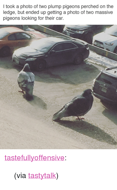 """plump: I took a photo of two plump pigeons perched on the  ledge, but ended up getting a photo of two massive  pigeons looking for their car. <p><a href=""""http://tumblr.tastefullyoffensive.com/post/171592304778/via-tastytalk"""" class=""""tumblr_blog"""" target=""""_blank"""">tastefullyoffensive</a>:</p> <blockquote><p>(via <a href=""""https://www.reddit.com/user/TastyTalk"""" target=""""_blank"""">tastytalk</a>)</p></blockquote>"""