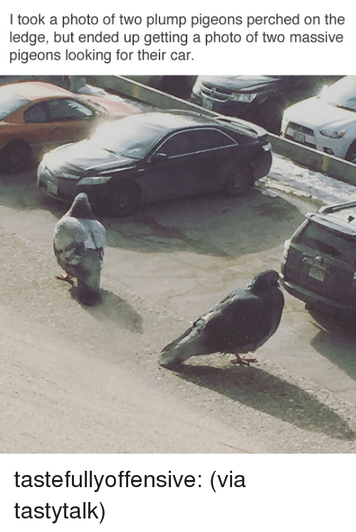 plump: I took a photo of two plump pigeons perched on the  ledge, but ended up getting a photo of two massive  pigeons looking for their car. tastefullyoffensive:  (via tastytalk)