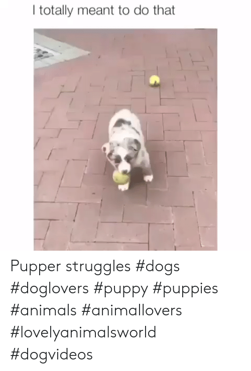 Animals, Dogs, and Puppies: I totally meant to do that Pupper struggles #dogs #doglovers #puppy #puppies #animals #animallovers #lovelyanimalsworld #dogvideos