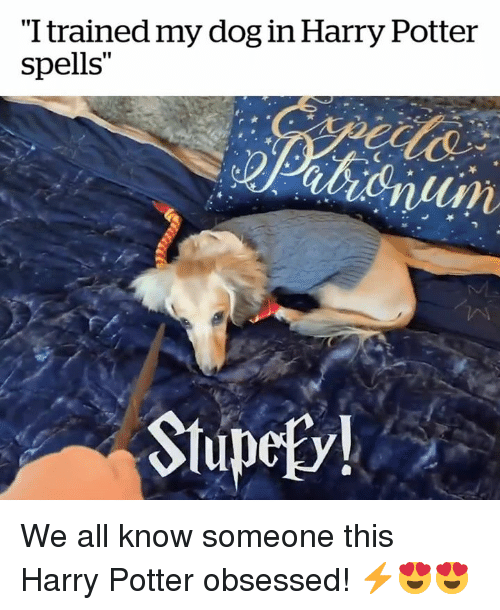 "Harry Potter, Potter, and Dog: ""I trained my dog in Harry Potter  spells""  Stupefv! We all know someone this Harry Potter obsessed! ⚡️😍😍"