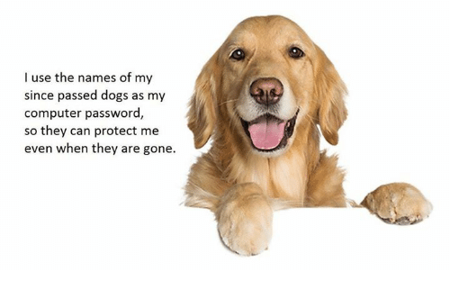 Dogs, Computer, and Gone: I use the names of my  since passed dogs as my  computer password,  so they can protect me  even when they are gone.