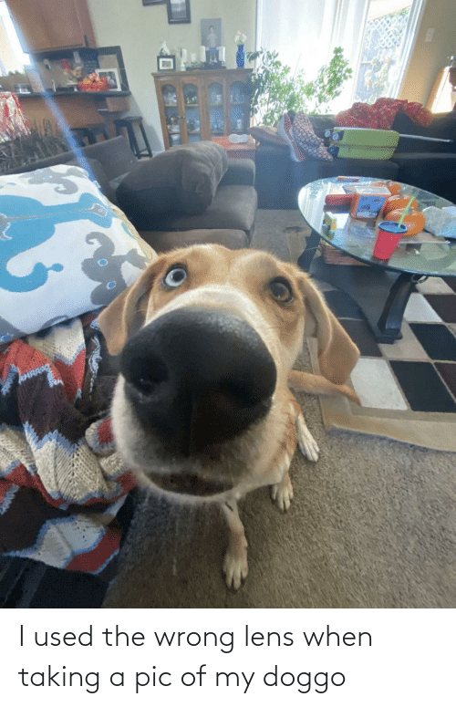 Taking: I used the wrong lens when taking a pic of my doggo