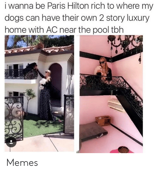 Hilton: i wanna be Paris Hilton rich to where my  dogs can have their own 2 story luxury  home with AC near the pool tbh Memes