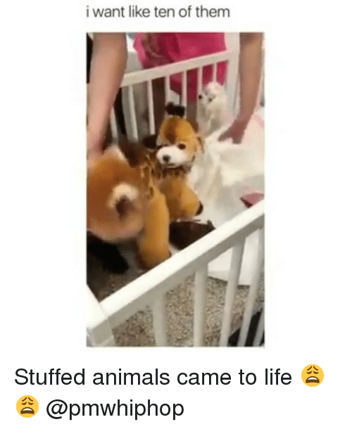Animals, Life, and Memes: i want like ten of them Stuffed animals came to life 😩😩 @pmwhiphop