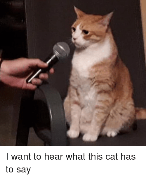 Memes, 🤖, and Cat: I want to hear what this cat has to say