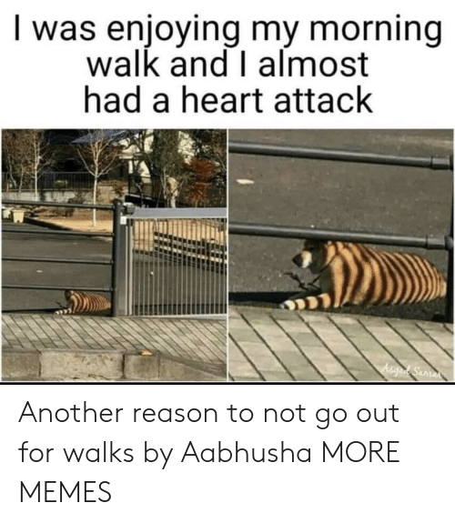 Almost Had A Heart Attack: I was enjoying my morning  walk and I almost  had a heart attack Another reason to not go out for walks by Aabhusha MORE MEMES