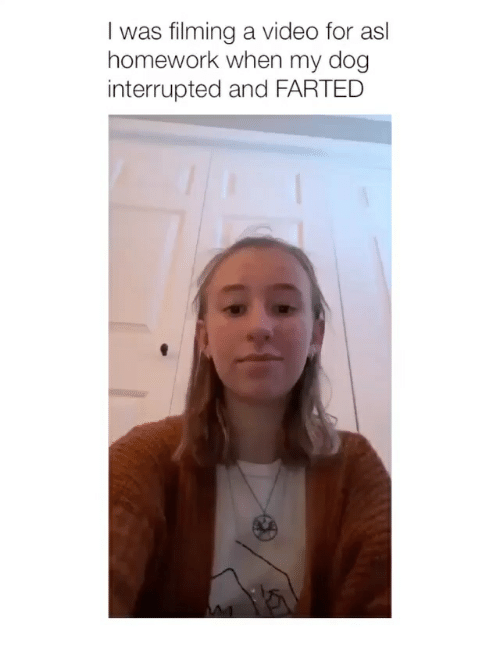 Farted: I was filming a video for asl  homework when my dog  interrupted and FARTED