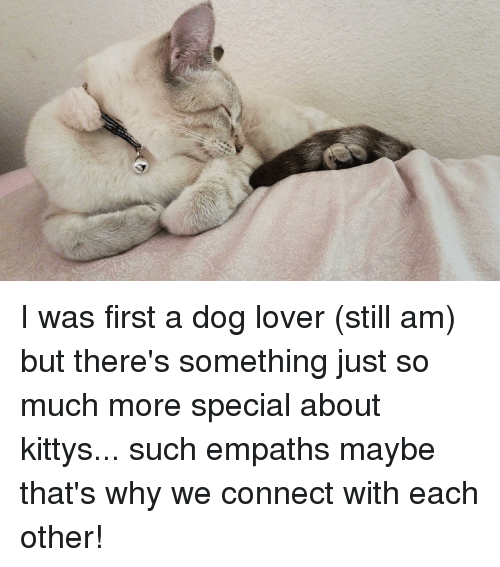 Dog, Why, and First