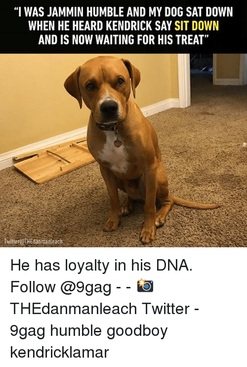 """Goodboy: """"I WAS JAMMIN HUMBLE AND MYDOG SAT DOWN  WHEN HE HEARD KENDRICK SAY SIT DOWN  AND IS NOW WAITING FOR HIS TREAT""""  witterOTHEdanmanteach He has loyalty in his DNA. Follow @9gag - - 📸THEdanmanleach Twitter - 9gag humble goodboy kendricklamar"""