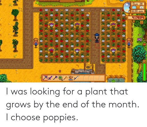Poppies: I was looking for a plant that grows by the end of the month. I choose poppies.
