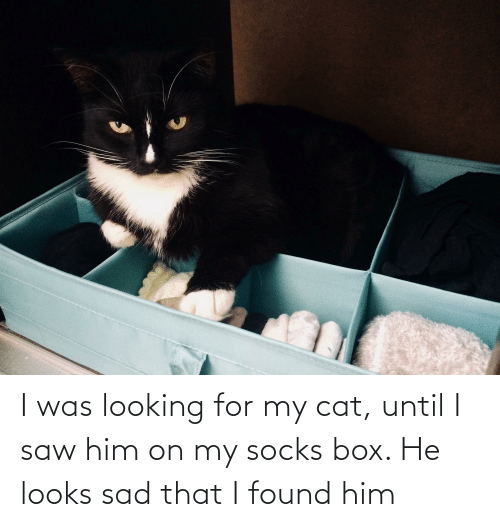 Found Him: I was looking for my cat, until I saw him on my socks box. He looks sad that I found him