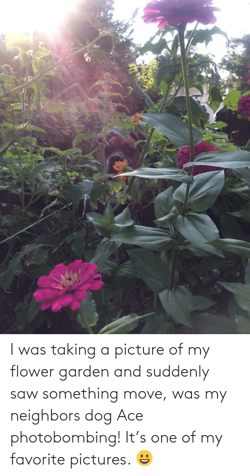 suddenly: I was taking a picture of my flower garden and suddenly saw something move, was my neighbors dog Ace photobombing! It's one of my favorite pictures. 😀