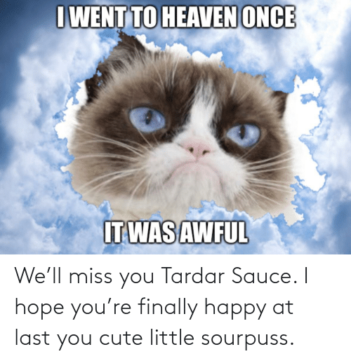 Tardar Sauce: I WENT TO HEAVEN ONCE  IT WAS AWFUL We'll miss you Tardar Sauce. I hope you're finally happy at last you cute little sourpuss.