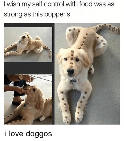 Stronge: I wish my self control with food was as  strong as this pupper's i love doggos