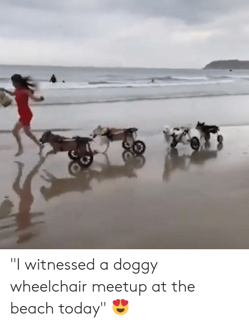 """doggy: """"I witnessed a doggy wheelchair meetup at the beach today"""" 😍"""