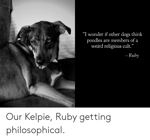 """Religious: """"I wonder if other dogs think  poodles are members of a  weird religious cult.""""  - Ruby Our Kelpie, Ruby getting philosophical."""