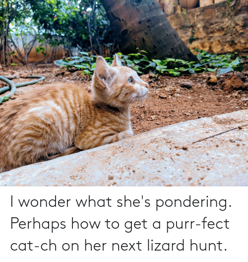 lizard: I wonder what she's pondering. Perhaps how to get a purr-fect cat-ch on her next lizard hunt.