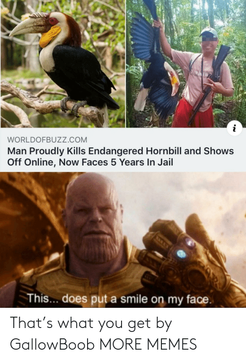 Dank, Jail, and Memes: i  WORLDOFBUZZ.cOM  Man Proudly Kills Endangered Hornbill and Shows  Off Online, Now Faces 5 Years In Jail  This.. does put a smile on my face That's what you get by GallowBoob MORE MEMES