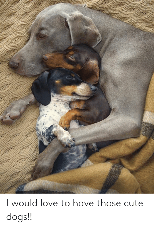 cute dogs: I would love to have those cute dogs!!