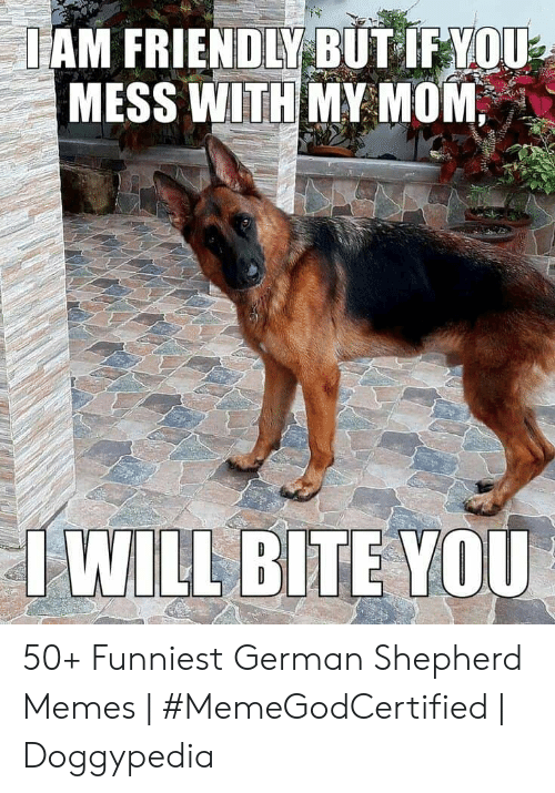 Memes, German Shepherd, and Mom: IAM FRIENDLY BUT IF YOU  MESS WITH MY MOM  I WILL BITE YOU 50+ Funniest German Shepherd Memes | #MemeGodCertified | Doggypedia