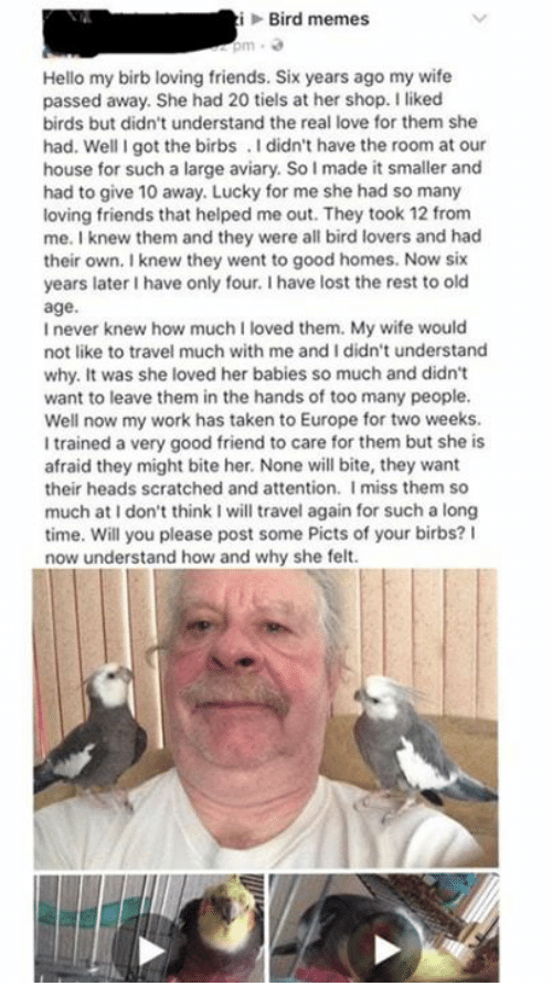 Friends, Hello, and Love: iBird memes  Hello my birb loving friends. Six years ago my wife  passed away. She had 20 tiels at her shop. I liked  birds but didn't understand the real love for them she  had. Well I got the birbs.I didn't have the room at our  house for such a large aviary. So I made it smaller and  had to give 10 away. Lucky for me she had so many  loving friends that helped me out. They took 12 from  me. I knew them and they were all bird lovers and had  their own. I knew they went to good homes. Now six  years later I have only four. I have lost the rest to old  age.  I never knew how much I loved them. My wife would  not like to travel much with me and I didn't understand  why. It was she loved her babies so much and didn't  want to leave them in the hands of too many people.  Well now my work has taken to Europe for two weeks.  I trained a very good friend to care for them but she is  afraid they might bite her. None will bite, they want  their heads scratched and attention. Imiss them so  much at I don't think I will travel again for such a long  time. Will you please post some Picts of your birbs? I  now understand how and why she felt.