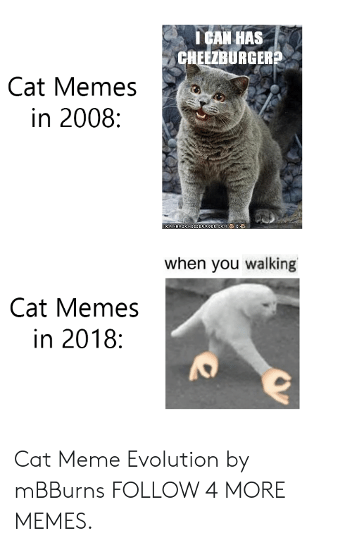 cat meme: ICAN HAS  CHEEZBURGER?  Cat Memes  in 2008:  OCANHASCHEE2EURGER COM :  when you walking  Cat Memes  in 2018: Cat Meme Evolution by mBBurns FOLLOW 4 MORE MEMES.