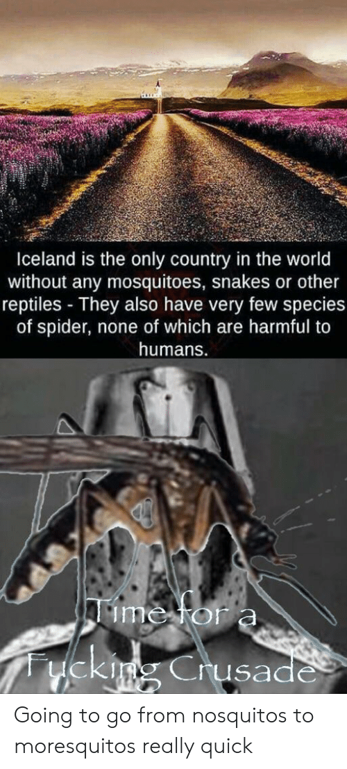 Spider, Iceland, and Snakes: Iceland is the only count  without any mosquitoes, snakes or other  reptiles They also have very few species  of spider, none of which are  in the world  harmful to  humans.  Aime for a  uekimg Crusade Going to go from nosquitos to moresquitos really quick