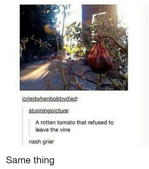 Rotten Tomatoes: icriedwhenbobby.died:  stunningpicture:  A rotten tomato that refused to  leave the vine  nash grier Same thing