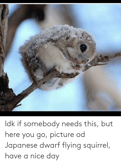 Flying: Idk if somebody needs this, but here you go, picture od Japanese dwarf flying squirrel, have a nice day