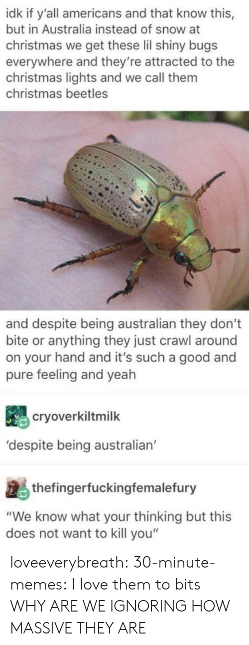 "Does Not Want: idk if y'all americans and that know this,  but in Australia instead of snow at  christmas we get these lil shiny bugs  everywhere and they're attracted to the  christmas lights and we call them  christmas beetles  and despite being australian they don't  bite or anything they just crawl around  on your hand and it's such a good and  pure feeling and yeah  cryoverkiltmilk  'despite being australian  thefingerfuckingfemalefury  ""We know what your thinking but this  does not want to kill you"" loveeverybreath:  30-minute-memes:  I love them to bits  WHY ARE WE IGNORING HOW MASSIVE THEY ARE"