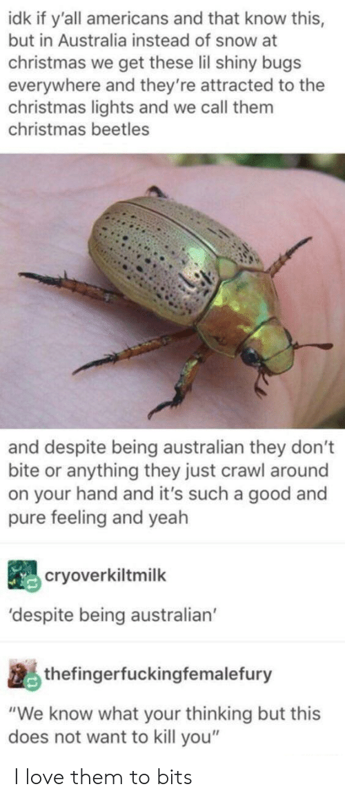 "Does Not Want: idk if y'all americans and that know this,  but in Australia instead of snow at  christmas we get these lil shiny bugs  everywhere and they're attracted to the  christmas lights and we call them  christmas beetles  and despite being australian they don't  bite or anything they just crawl around  on your hand and it's such a good and  pure feeling and yeah  cryoverkiltmilk  'despite being australian  thefingerfuckingfemalefury  ""We know what your thinking but this  does not want to kill you"" I love them to bits"