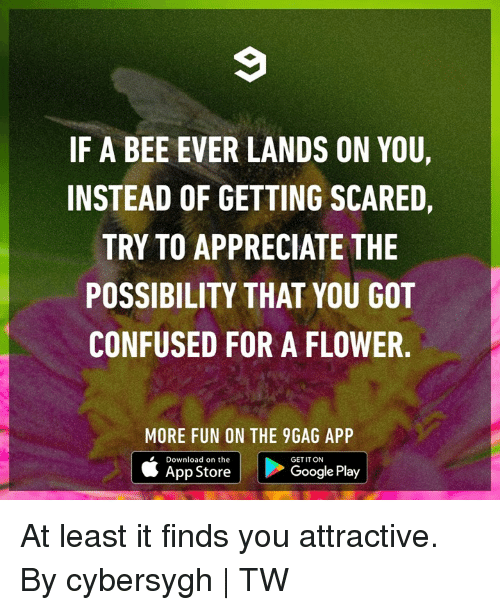 9gag, Confused, and Dank: IF A BEE EVER LANDS ON YOU,  INSTEAD OF GETTING SCARED,  TRY TO APPRECIATE THE  POSSIBILITY THAT YOU GOT  CONFUSED FOR A FLOWER  MORE FUN ON THE 9GAG APP  Download on the  GET IT ON  App Store  Google Play At least it finds you attractive.  By cybersygh | TW
