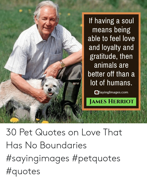 loyalty: If having a soul  means being  able to feel love  and loyalty and  gratitude, then  animals are  better off than a  lot of humans.  SayingImages.com  JAMES HERRIOT 30 Pet Quotes on Love That Has No Boundaries #sayingimages #petquotes #quotes