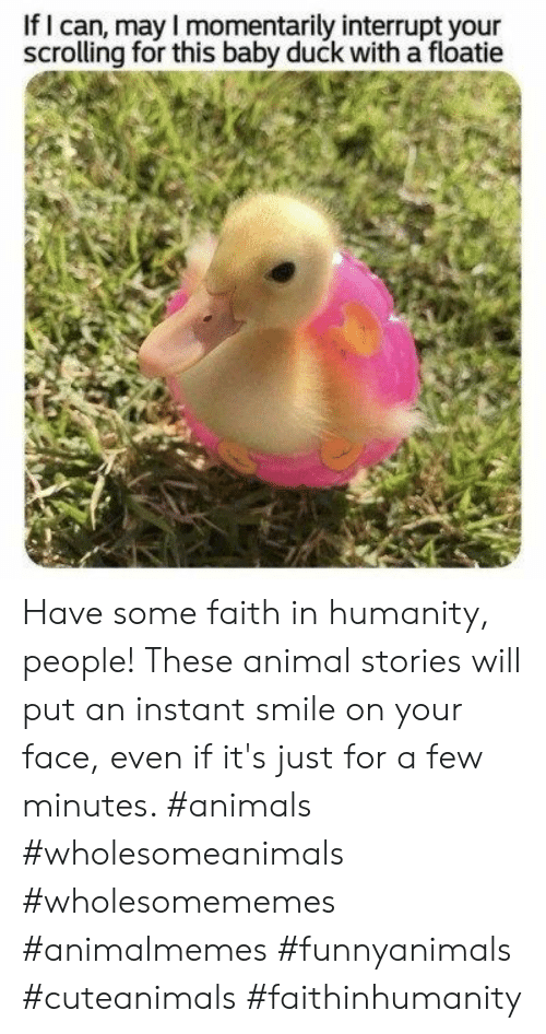 Faith In Humanity: If I can, may I momentarily interrupt your  scrolling for this baby duck with a floatie Have some faith in humanity, people! These animal stories will put an instant smile on your face, even if it's just for a few minutes. #animals #wholesomeanimals #wholesomememes #animalmemes #funnyanimals #cuteanimals #faithinhumanity