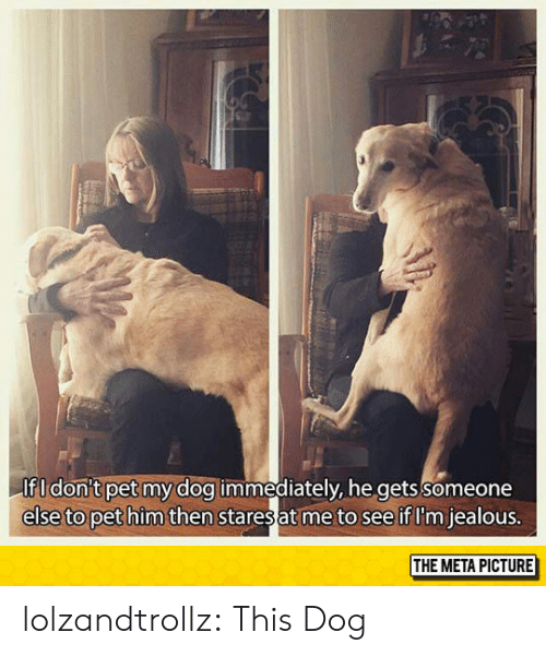Jealous, Tumblr, and Blog: If I don't pet my dog immediately, he gets someone  else to pet him then  staresat me to see if I'm jealous  THE META PICTURE lolzandtrollz:  This Dog